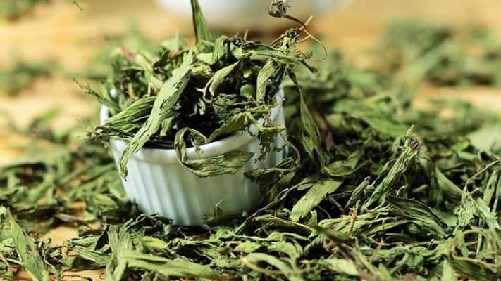tác dụng của cỏ ngọt sấy khô