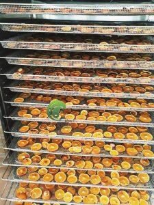 Giá máy sấy trái cây